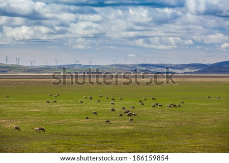 Sheeps grazing on farmland with wind turbines on the hills in the background - stock photo