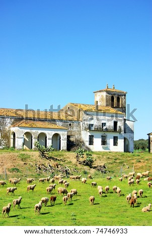 Sheeps in farm, Extremadura region.