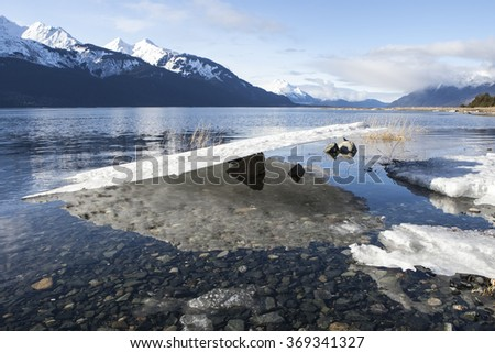 Sheet of ice balanced on a rock as the tide goes out on a Southeast Alaskan beach in winter.
