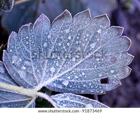 Sheet with drops of the frozen water, hoarfrost - stock photo