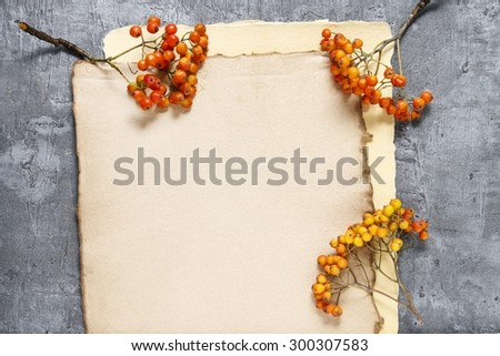 Sheets of vintage paper and rowan berry twigs, copy space