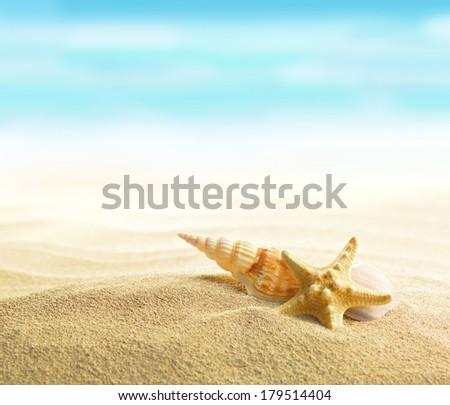 Shell and starfish on sandy beach - stock photo