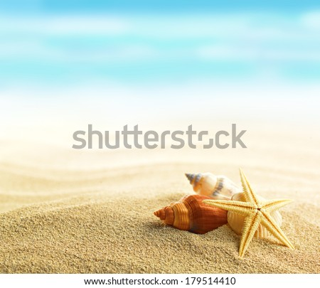 Shell and starfish on sandy beach - stock photo