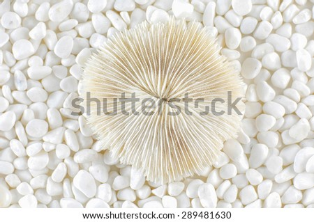 Shell and white stones  - stock photo