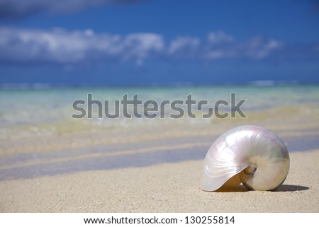 Shell at the paradise beach - Mauritius, Africa. - stock photo