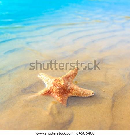 Shell Fish Sea - stock photo