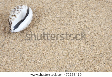 Shell in the beach sand - copy space - stock photo