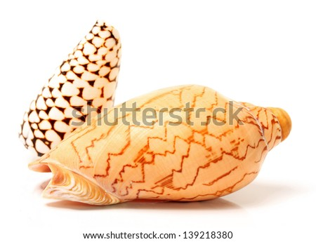 shell isolate on the white background