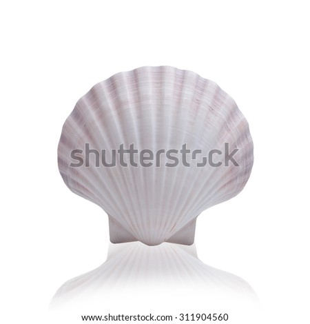 Shell  isolated on white background with clipping path. - stock photo