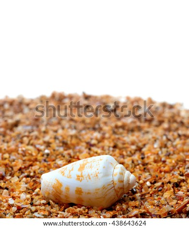 Shell of cone snail on sand and white background with copy space - stock photo