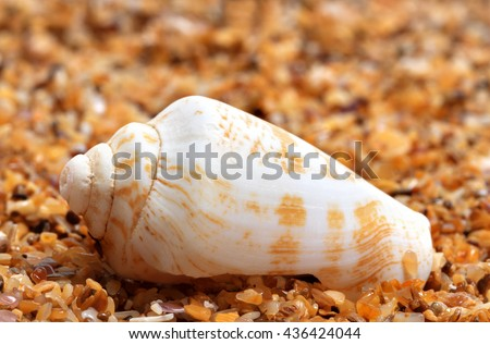 Shell of cone snail on sand at sun day
