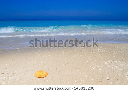 Shell on a sandy beach in Greece - stock photo