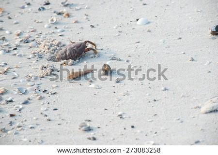 shell on beach - stock photo