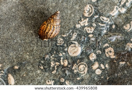 shell on rock