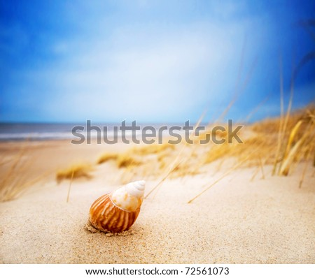 Shell on sand on the summer beach. Ocean in the background - stock photo