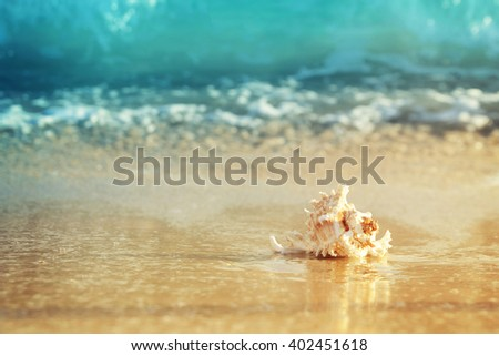 Shell on sandy beach - stock photo