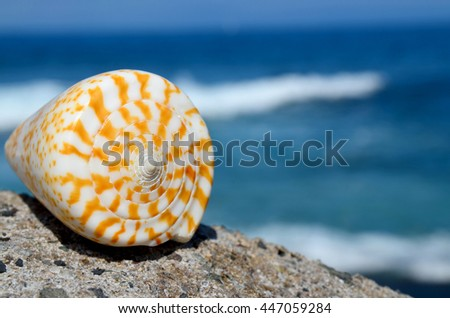 Shell on the beach with the ocean in the background.Summer or vacation concept.Selective focus.Copy space. - stock photo