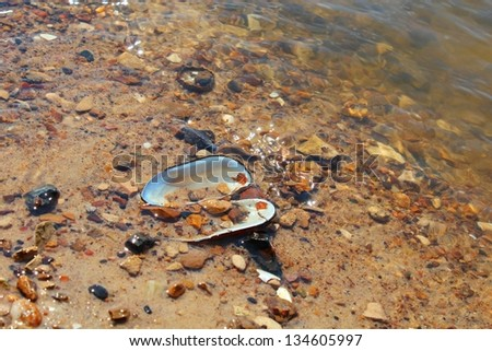Shell on the river sandy beach