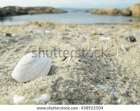 Shell on the sand beach against the sea. Larvik, Norway. - stock photo