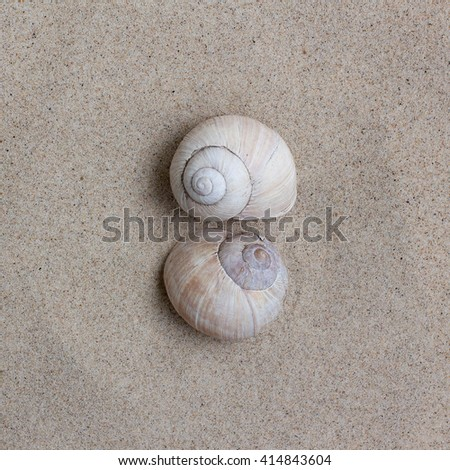 shell on the sand for a photo calendar, exotic object collection - stock photo