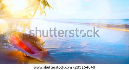 Shell on the tropical beach background - stock photo