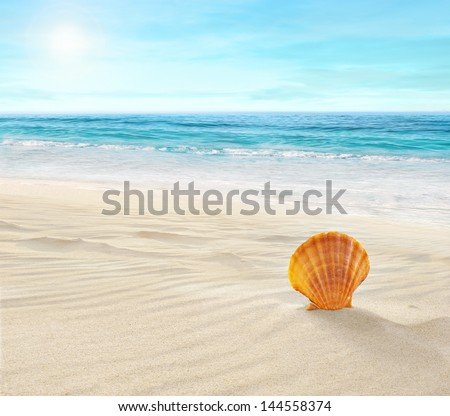 Shell on tropical beach - stock photo