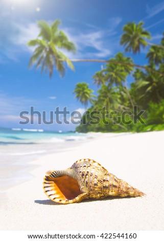 Shell on tropical beach. - stock photo