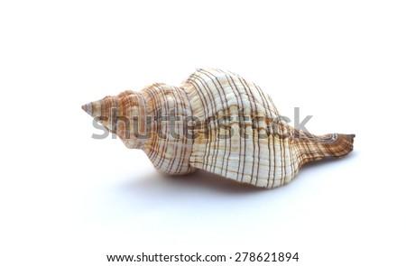 Shell on white - stock photo