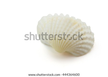 shell on white background, clipping part