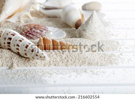 shell pearl - stock photo