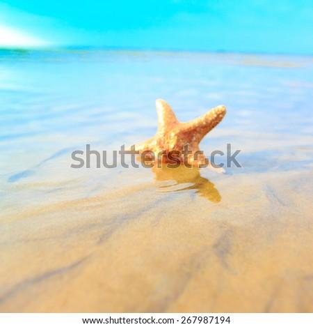Shell Sea Sand  - stock photo
