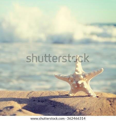 Shell Sea Star - stock photo