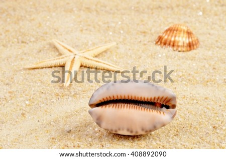 Shell. Shell on the beach. Sand and shell - background. Shell on sand. - stock photo