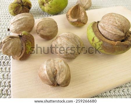 Shellbark hickory nuts - stock photo