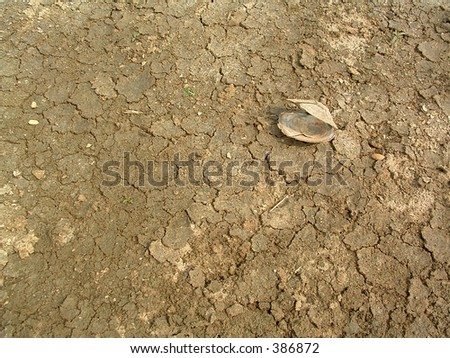 shellfish and dried mud - stock photo