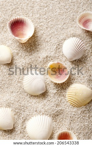 Shellfish On The Sand