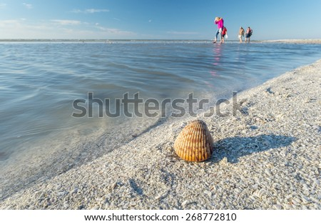 Shelling on the Sandbar During Low Tide - stock photo