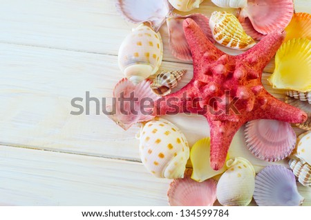 shells - stock photo
