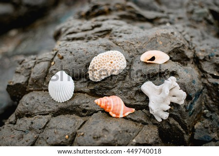 Shells and corals on the rocks.