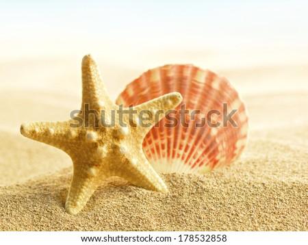 Shells and starfish on sandy beach - stock photo