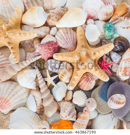 Shells and starfish on sandy beach. Summer background. Summer concept . Starfish with sand as background