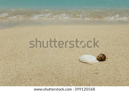 Shells at the beach