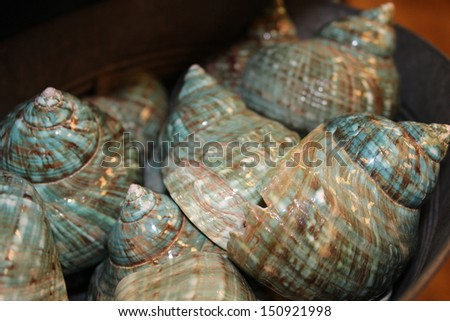 Shells Closeup - stock photo