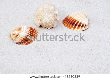 shells in white sand, room for your text - stock photo