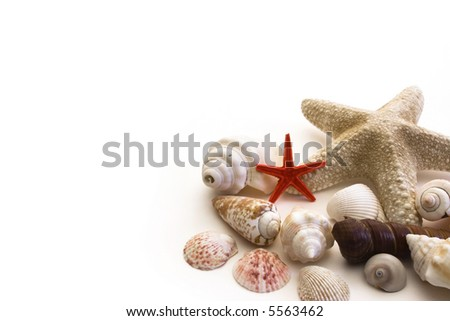 Shells isolated on a white background - stock photo