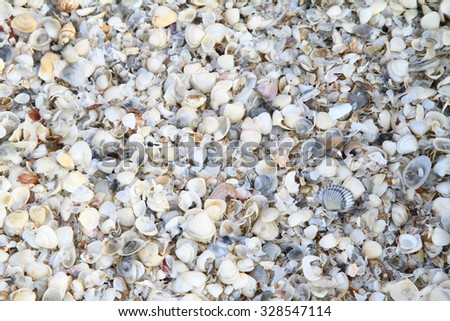 Shells of many types and sizes