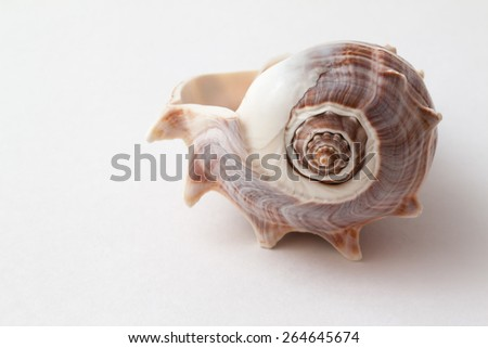 Shells of sea crustacean on a gradient gray background - stock photo