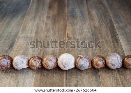 Shells of snails on the wooden background - stock photo