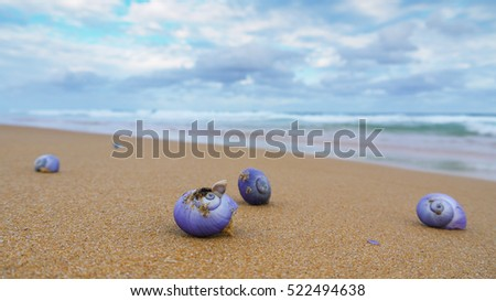 Shells on a beach, Mimosa Rocks National Park in Australia