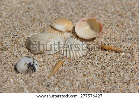 Shells on a sand background.